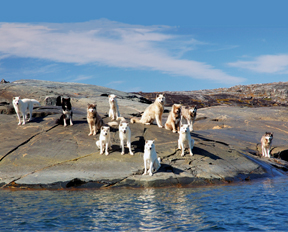 Dog Island, in Ungava Bay, northern Canada. Copyright 2013 Corey Sandler