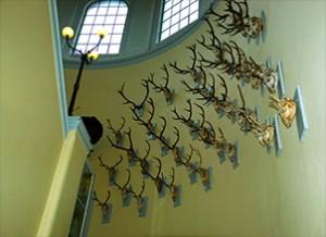 BERGEN6 Bergen University Museum