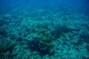 BLOG Bridgetown Barbados Atlantis SANDLER 23Feb2015-0427