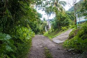 BLOG Dominica Bois Cotlette 17Feb2015-0274