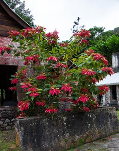 BLOG Dominica Bois Cotlette 17Feb2015-0299
