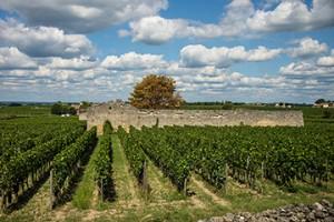 BLOG Bordeaux Emilion FR 04Sept2015-2632